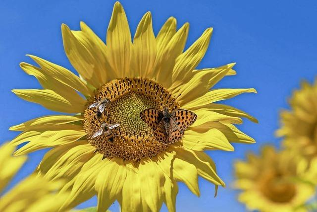 Warmes Wetter bringt viel Honig