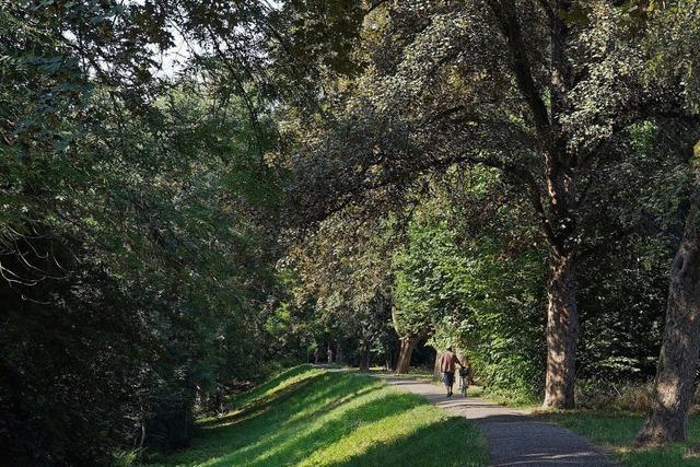 Bäume müssen wegen Norm weichen