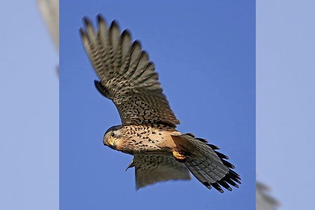 Vogelkundliche Morgenwanderung im Naturschutzgebiet Feldberg