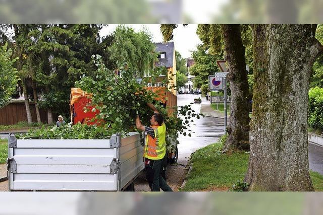 Baumpflege in 20 Metern Höhe