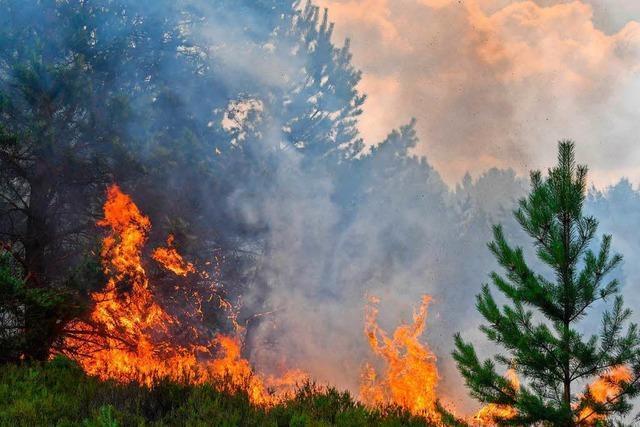 Sommerhitze und Klimawandel: Die Erde schwitzt