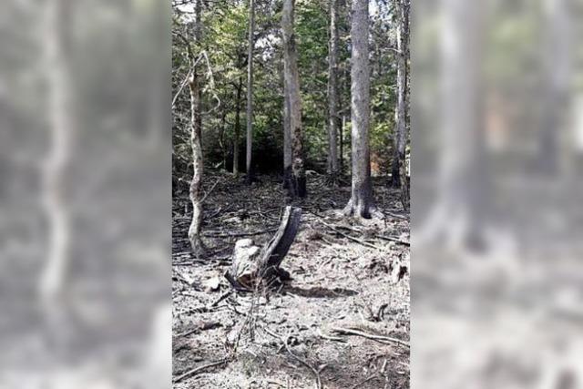 Waldbrandgefahr nimmt stark zu