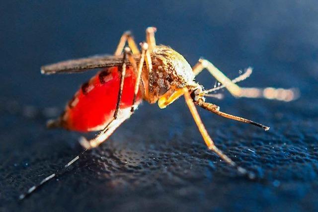 Dank der Trockenheit gibt es dieses Jahr weniger Mücken