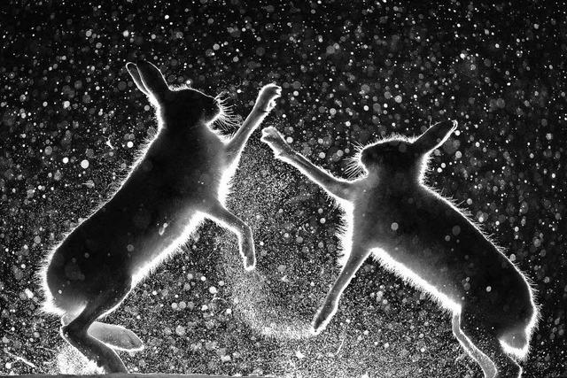 """Siegerbilder des Wettbewerbs """"Europäischer Naturfotograf des Jahres 2017"""