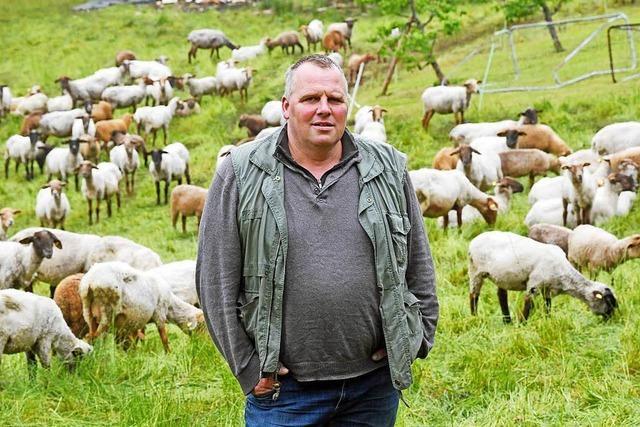 Schäfer in Bad Wildbad klagt über mehr Arbeit wegen Wolf-Schutzzäunen