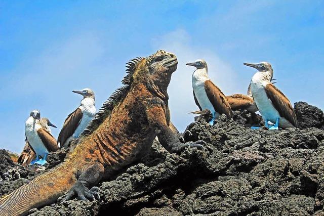 Galapagos – und die Geschichte der Angermeyers und Wittmers