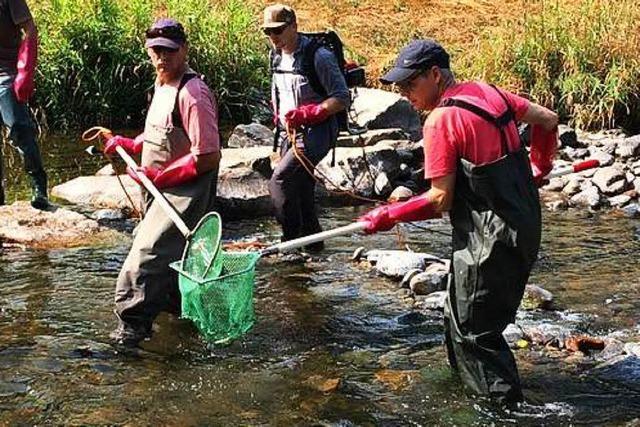 Angelsportler retten 2500 Fische aus der Dreisam