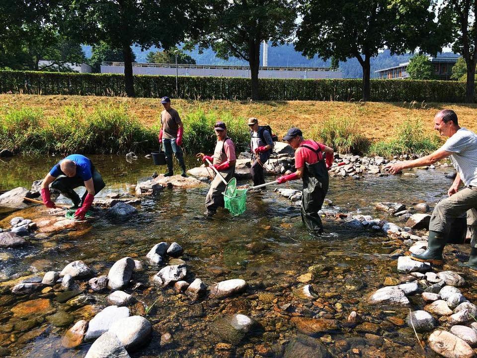 Mitglieder des Angelvereins am Samstag beim Abfischen  | Foto: franz bühler
