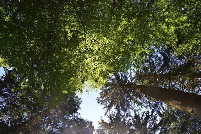 Mehr als einfach nur Bäume