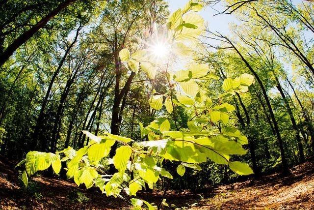 Trockenstress: So leidet der Wald unter der anhaltenden Hitze