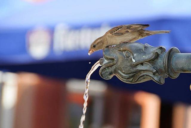 Tierschützer: Gebt Vögeln, Igeln und Eichhörnchen Wasser!