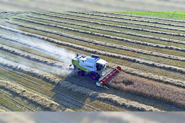 Landwirte rechnen mit Einbußen