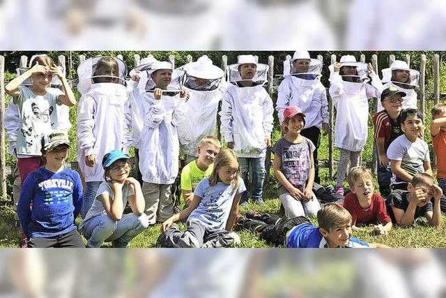 Fleißig wie die Honigbienen