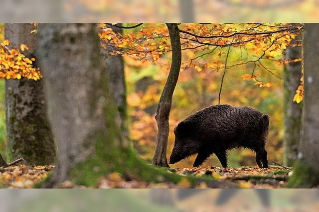 Kreis schafft Abschussanreize für Jäger