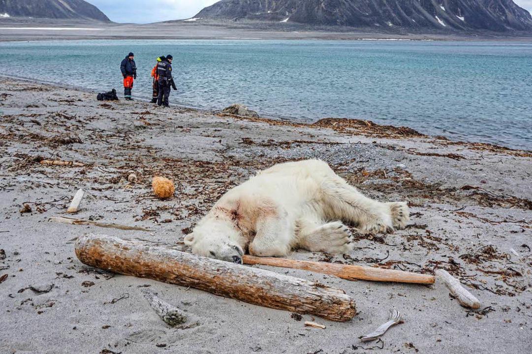 Der erschossene Eisbär    Foto: dpa