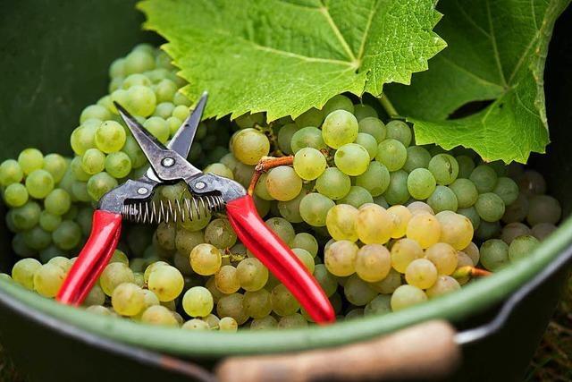 Wie wird Wein gemacht?