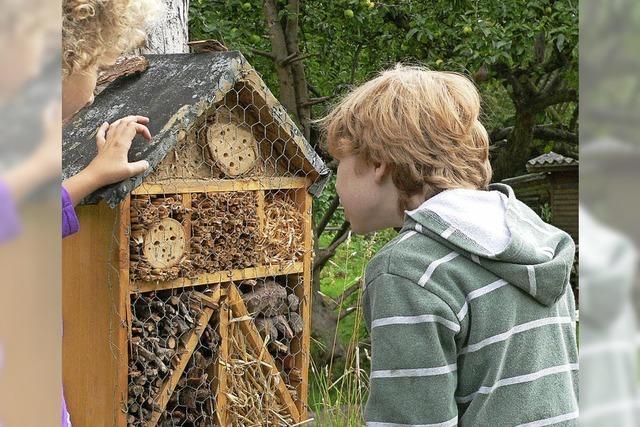 Insektenhotel basteln im Naturschutzzentrum Feldberg