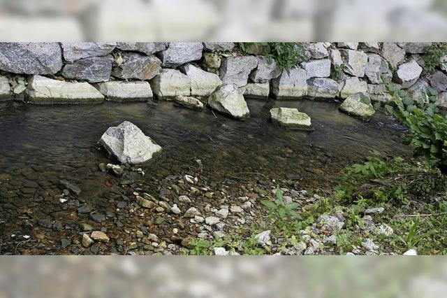 Bäche und Flüsse sind durch Trockenheit bedroht