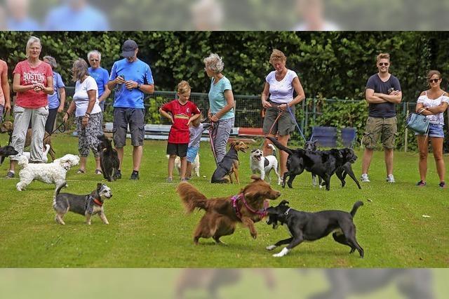 Fest für Tiere und Tierfreunde