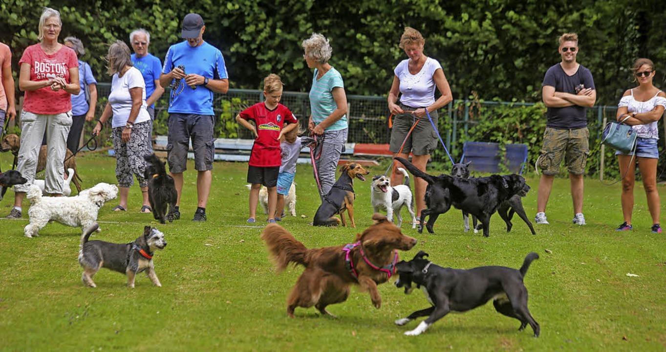 Pure Lebensfreude zeigen die Hunde bei...er Hundeplatz, zum Spaß ihrer Besitzer  | Foto: Sandra Decoux-Kone