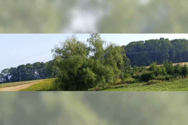 Gemeindewald soll weiter wachsen