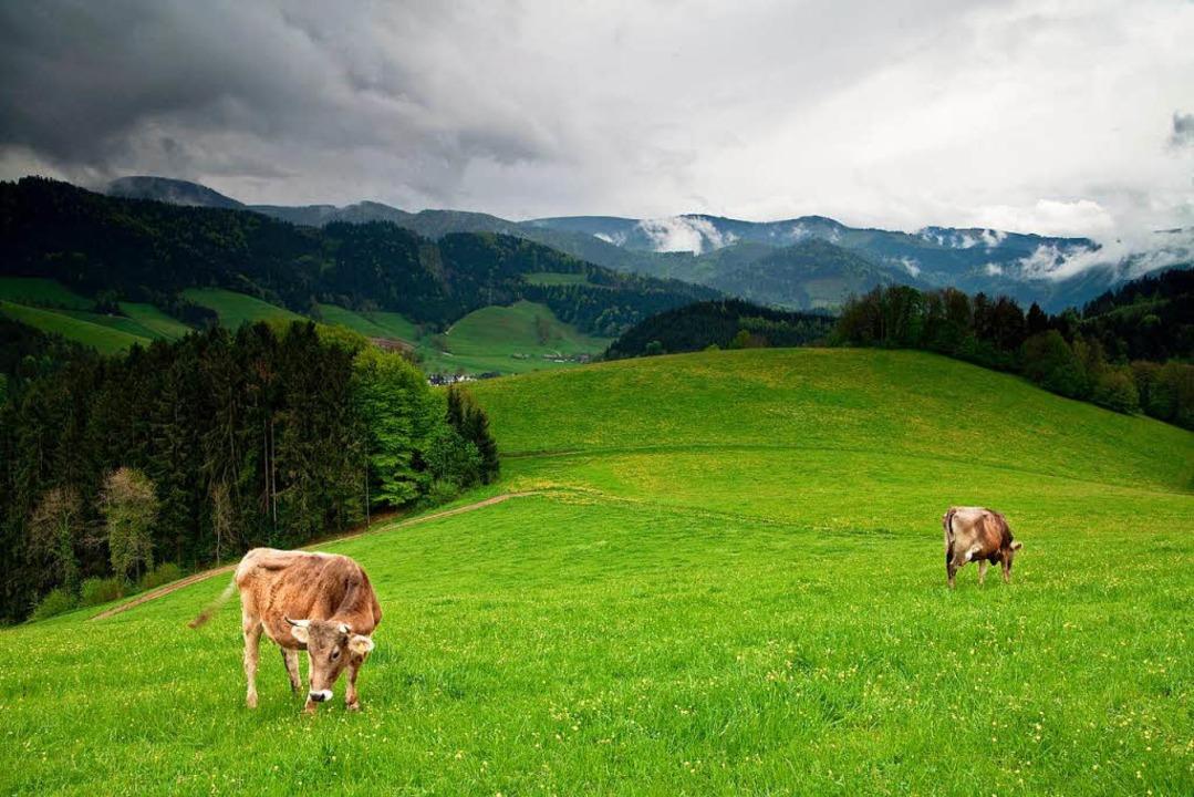 Weniger dichtes Gedränge auf einer Weide im Schwarzwald  | Foto: Stefan Arendt - Fotolia