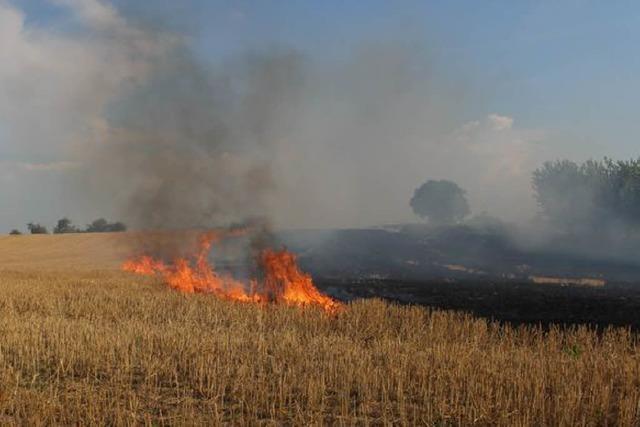 Am Sonntagnachmittag hat in March ein Stoppelfeld gebrannt