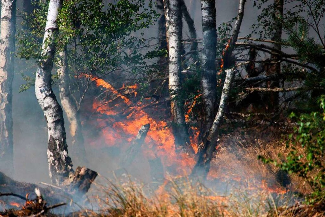 Der Wald brennt – hier bei Jüteborg im Bundesland Brandenburg.  | Foto: Julian Stähle
