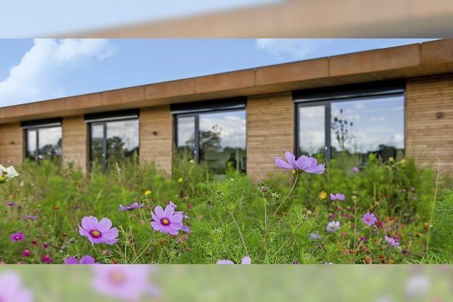 Wie der heimische Garten zur Wildblumenwiese wird