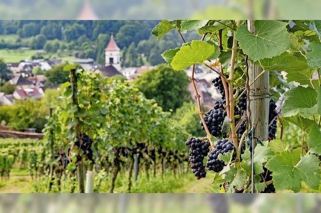 Ettenheim feiert Sommer, Sonne,Wein