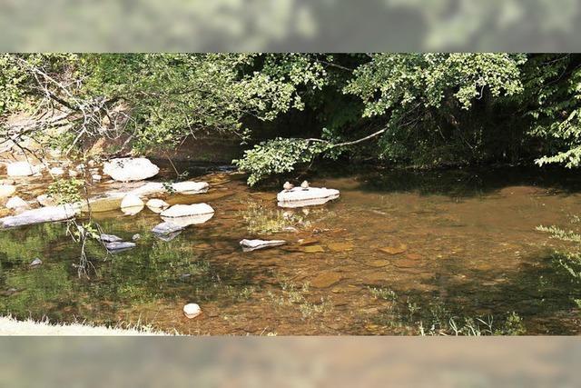 Fische in Not: Sauerstoff wird knapp im Fluss