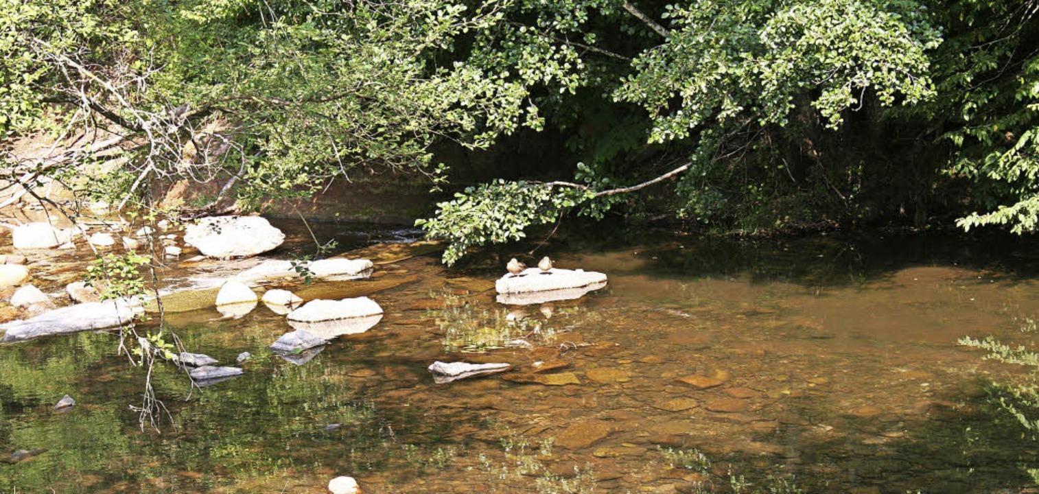 Nur noch hauchdünn steht das Wasser in...e Trockenheit inzwischen bedrohlich.      Foto: Marlies Jung-Knoblich