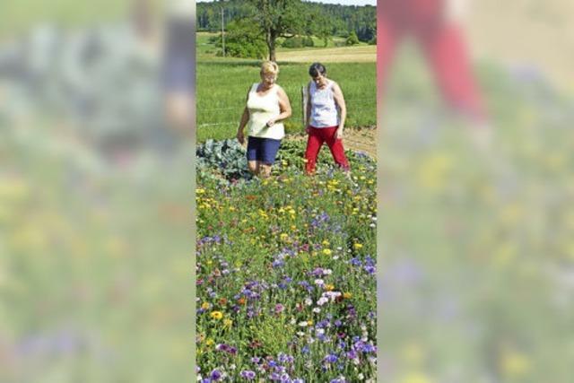 Blütenpracht von Samen aus dem Burgenland