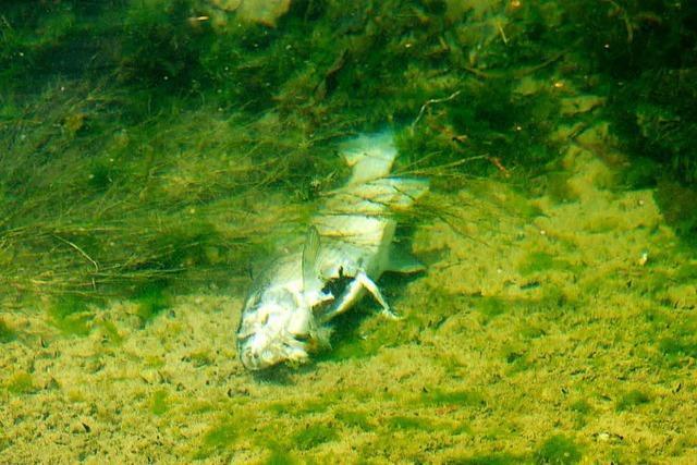 Schweizer Fischer klagen über deutsche Fischer