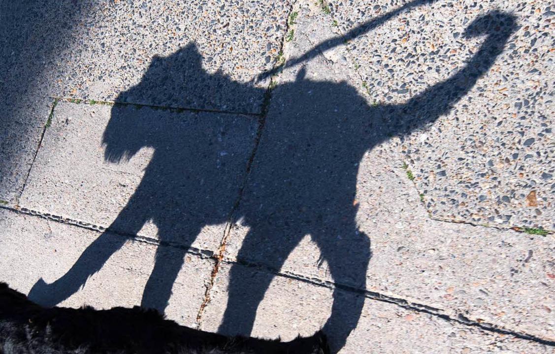 Ein kleiner Mischlingshund wurde vor e...kt in Waldshut gestohlen (Symbolbild).  | Foto: dpa