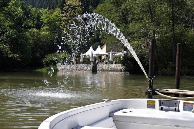 1000 tote Fische im Freiburger Waldsee