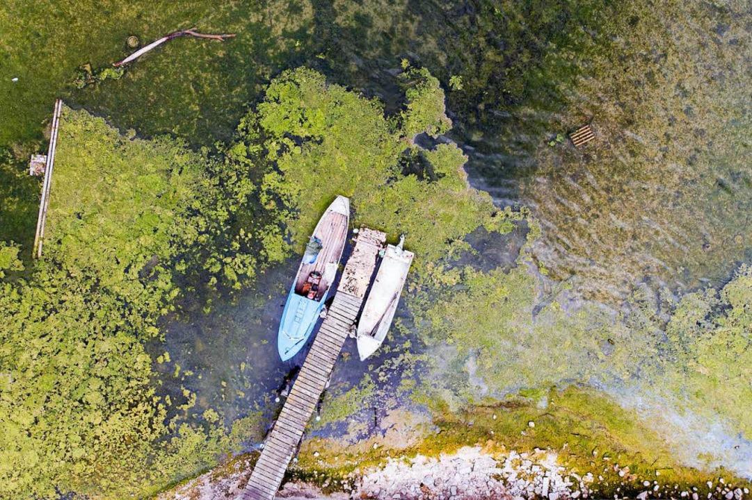 Zwei Boote liegen an einem von von Alg... bei geringem Wasserstand am Bodensee.  | Foto: dpa