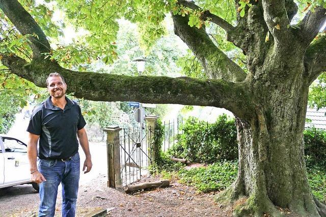 Digitale Datei für alle Bäume
