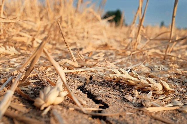 Aktuelle Hitzewelle erinnert ans extreme Dürre-Jahr 1540