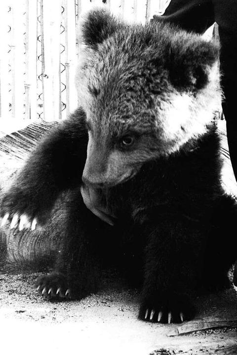 Kleiner Bär, vermutlich Mitte der 1980er Jahre  | Foto: BZ-Archiv