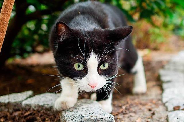 Katzen fressen gewaltige Mengen an Vögeln