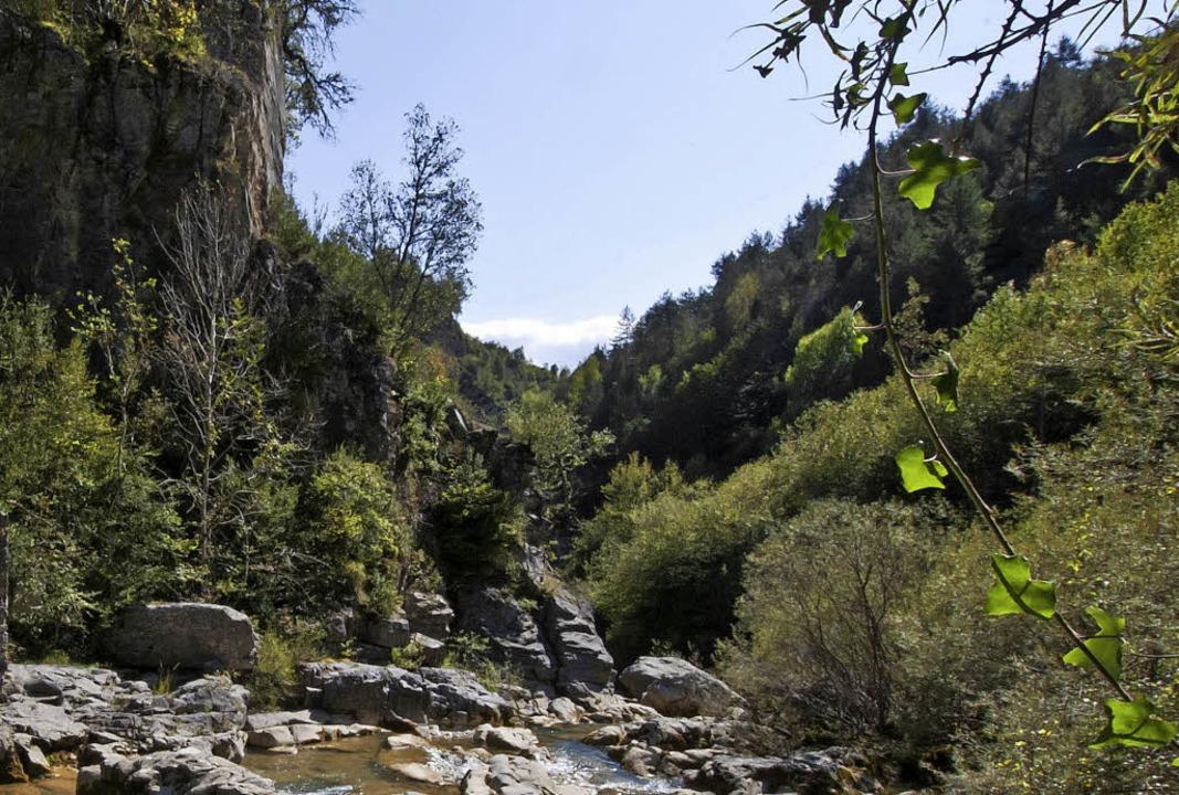 Wild gewachsen: Gebirgswald in den französischen Pyrenäen   | Foto: Andrea Schiffner