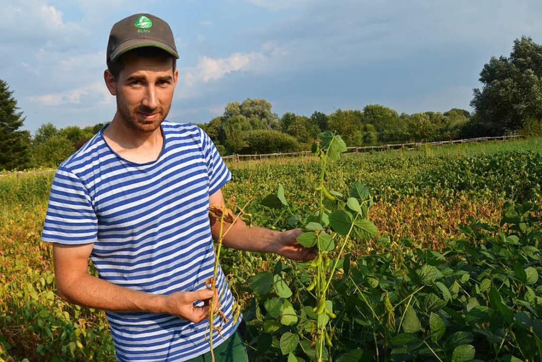 Biolandwirt Ralf Schill aus March zeig...gte (l.) und eine normale Sojapflanze.    Foto: Hupka