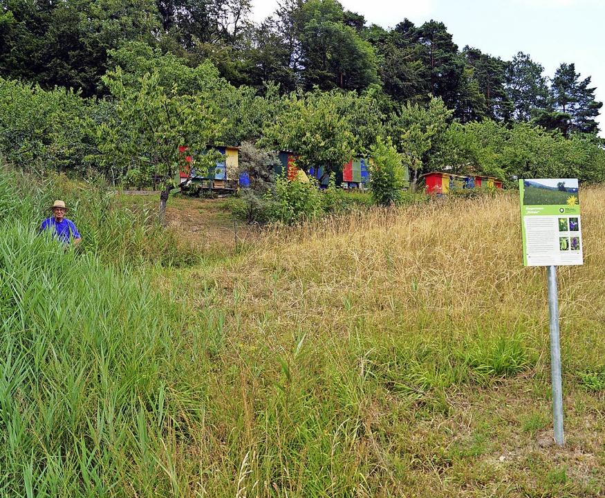 Seit den 1990er-Jahren pflegt die BUND... davon seine Bienenhäuser stehen hat.   | Foto: Silke Hartenstein