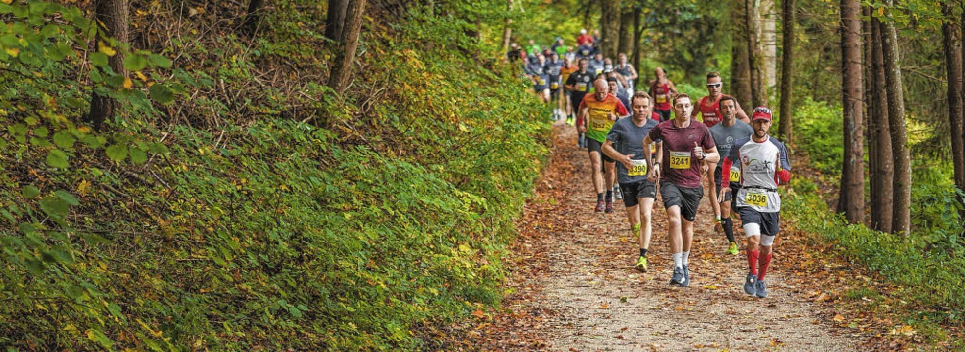Einer der ältesten Naturmarathons hält...s Schwarzwaldmarathons sind Waldwege.     Foto: Tobias Raphael Ackermann