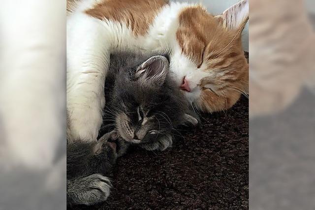 URTEILSPLATZ: Es lebe der Cat Content