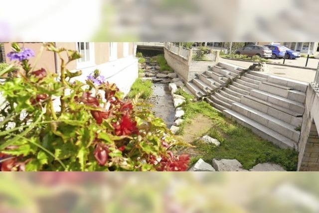 Stadt vernachlässigt Pflanzen nicht