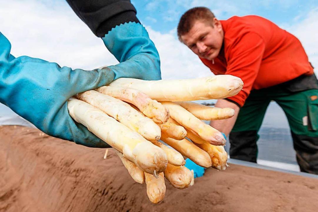 Saisonarbeitskräfte haben kaum langfristige Perspektiven.  | Foto: dpa