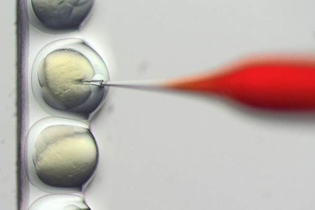 Forschung in der Gentechnik käme billiger als Entwicklungshilfe