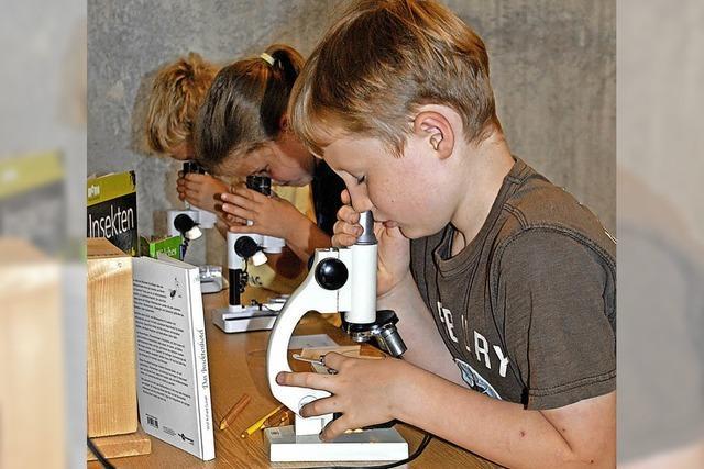Krabbeltiere unterm Mikroskop